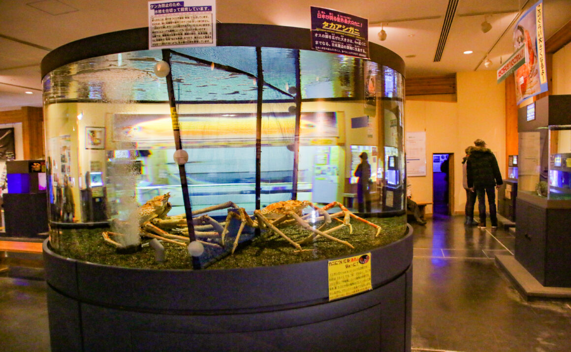 "Popular with local children! Tottori Karo Crab Aquarium ""Kanikkokan"" is a small aquarium, focusing on crab."