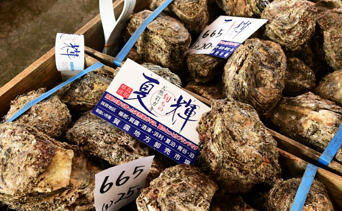 "Mountains of oysters at local markets, Tottori brand ""Natsuki"" is a must!"