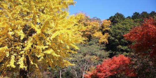 石谷家の秋の庭園特別公開