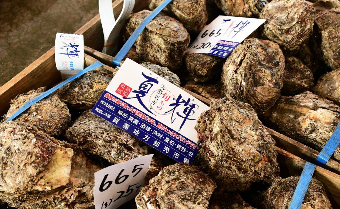 市場に並ぶカキの山 鳥取ブランド「夏輝(なつき)」も必見