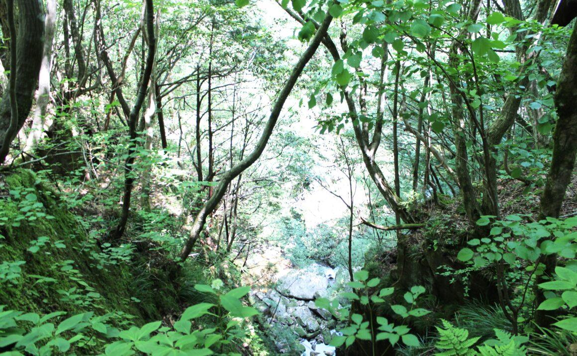 鳥取砂丘を育む源流の森が〝心の充電〟に導く
