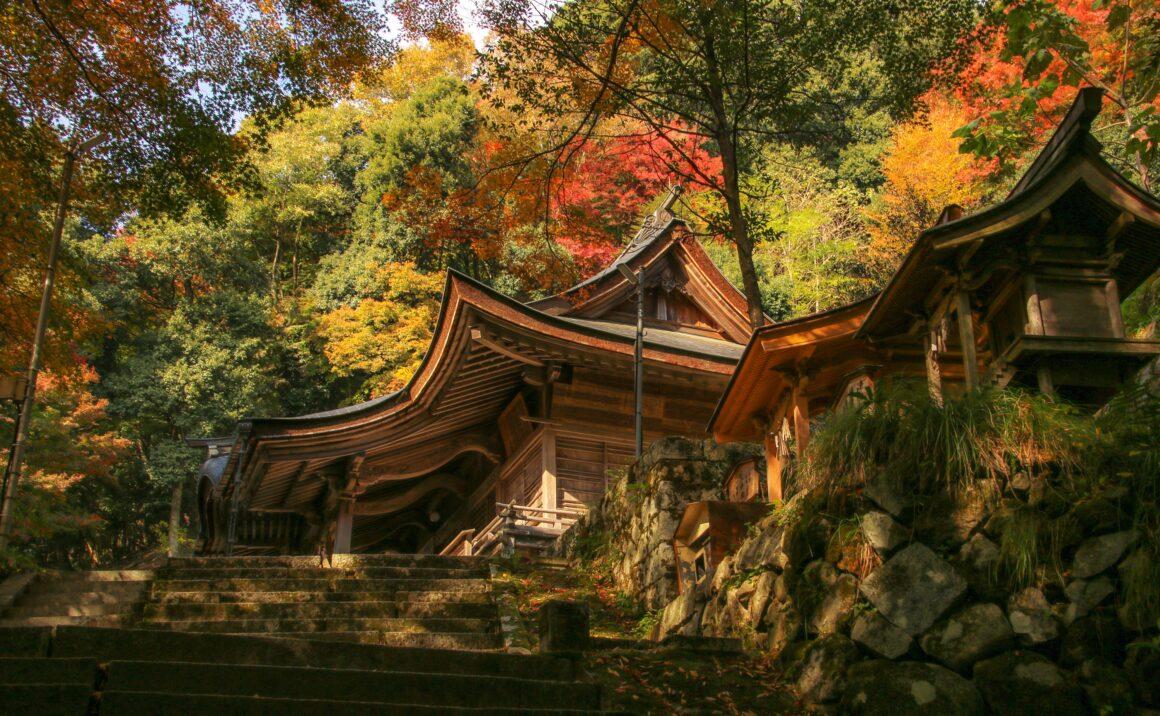 紅葉に染まる参道 諏訪神社