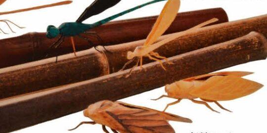 小林博道 作品展「竹彫刻の昆虫展」