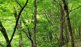 八東ふる里の森リニューアルオープン