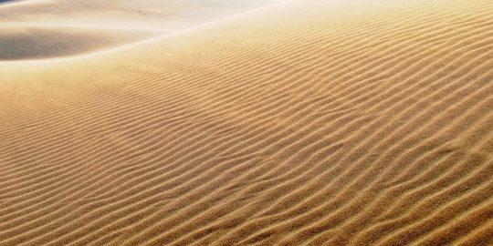 鳥取砂丘ビジターセンター「自由研究一緒にがんばります期間」のご案内