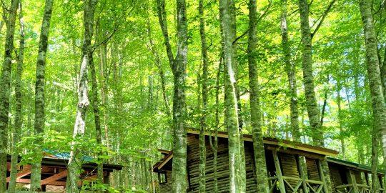 八東ふる里の森 10月イベントスケジュール